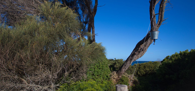 Sunset Bay of Fires Lodge Tasmania trees