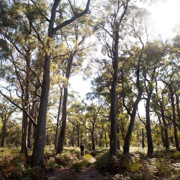 Eucalpyt Forest Bay Of Fires Lodge Walkt