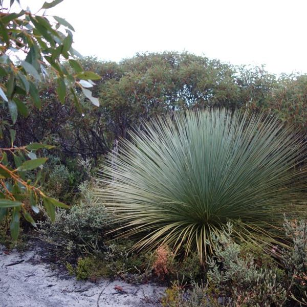 Kangaroo Island Flora